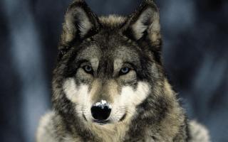 Волчанка – причины, симптомы, диагностика, лечение