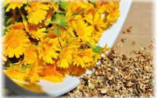 Календула – лечебные свойства и применение в медицине