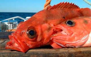 Морской окунь калорийность