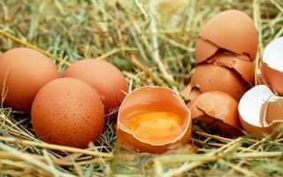 Можно ли есть жареные яйца при похудении