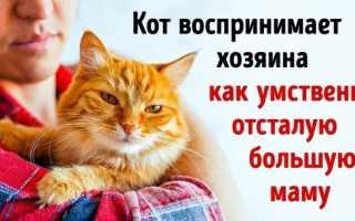 Женское мнение: В России кошка – лучший друг человека