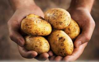 Сколько калорий в жареной картошке